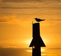 Channel Marker, Key West, Lower Keys, Quixotic Guides, bird, silhouette, beach, ocean, paradise, vacation, Florida, adventure guidebook